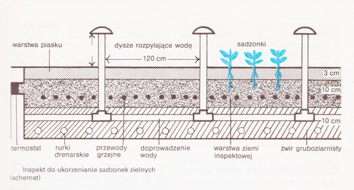 inspekt sadzonki zielne